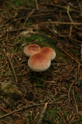 Forest Fungi