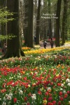 Multi-colored Tulips Beds at Groot Bijgaarden