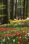 Multi-colored Tulips Beds at Groot Bijgaarden